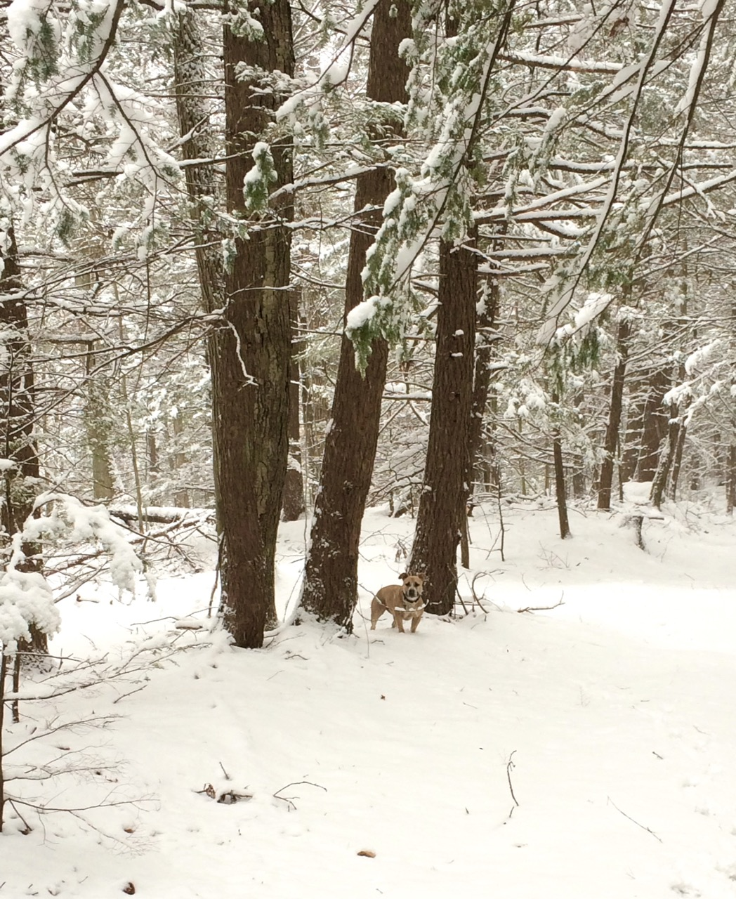 Winter Wonderland pre-porcupine
